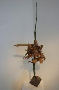 Eukalyptus-Rinde und Schachtelhalm